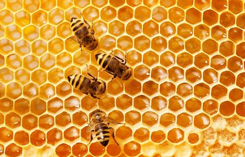 这是关于蜜蜂的所有嗡嗡声