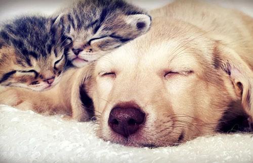 为什么有些动物睡得那么多?