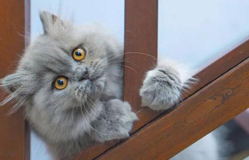 脸被弄脏的猫无法表达情绪