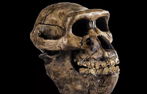 地球上有多少种早期人类物种?