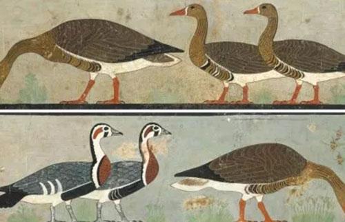 古埃及的蒙娜丽莎?当然是精心绘制的绝种鹅