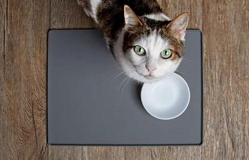 猫在社交上太无能为力,无法忠诚