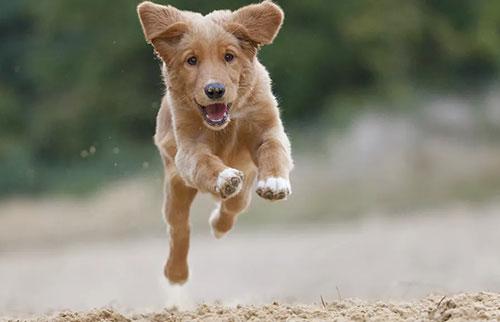 狗和猫为什么以随机的速度奔跑?