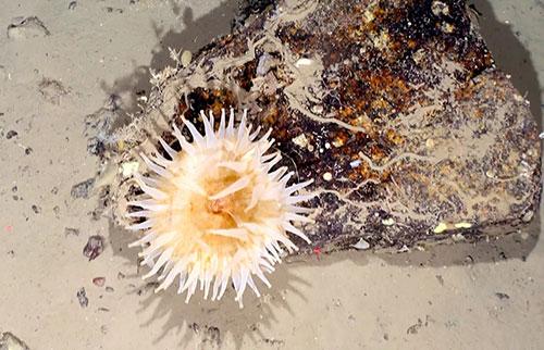 科学家发现被困在冰中长达50年的南极海洋生物
