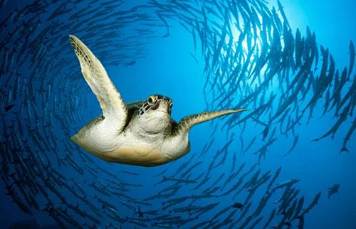 海洋生物奇怪的循环游泳让科学家感到困惑