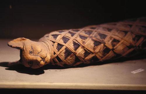 为什么古埃及人痴迷于猫?