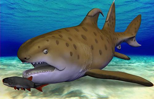 """拥有3亿年历史的""""哥斯拉鲨鱼""""被确认为新物种"""