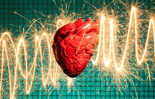 其他动物会发作心脏病吗?
