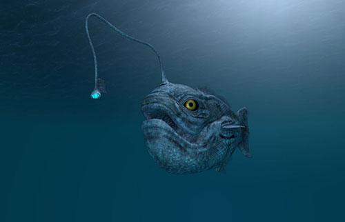 头上有灯泡的深海鱼在神秘地冲上岸