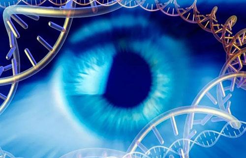 藻类的基因帮助一个盲人恢复了一些视力
