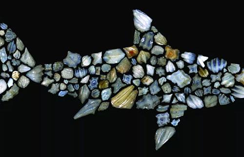 1900万年前的神秘事件几乎消灭了鲨鱼