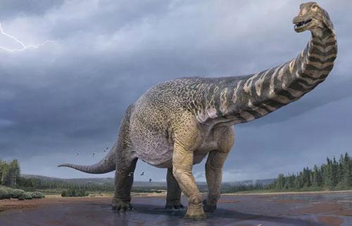 破纪录的澳大利亚恐龙和篮球场一样长