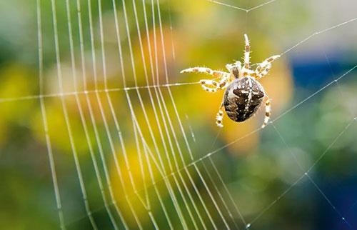 每个蜘蛛网都是独一无二的吗?