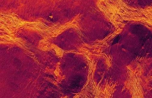 金星有一个粘稠的流动地幔在其表面推挤地壳块