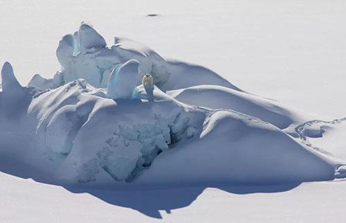 """北极的""""最后一个冰区""""可能无法在气候变化中幸存下来"""
