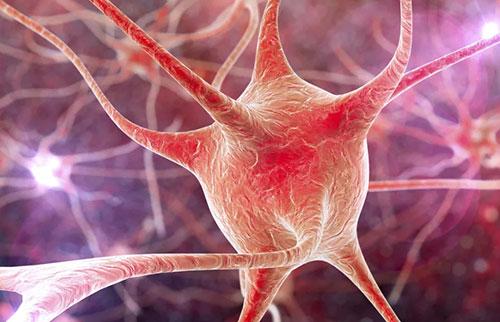 """科学家们刚刚发现了备受追捧的""""祖母神经元"""""""