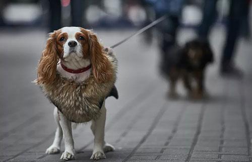 狗知道人类何时对它们撒谎