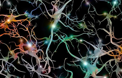 """新模型揭示,合成脑细胞可存储""""记忆"""""""