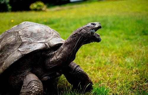 乌龟为什么能活这么久?