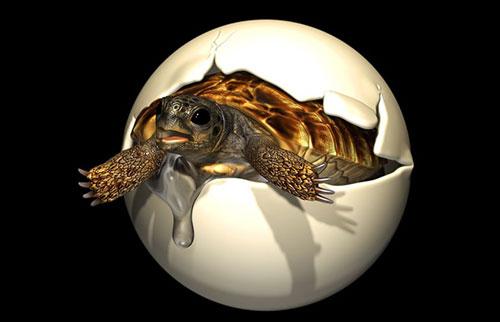 恐龙时代的稀有胚胎由人类大小的乌龟产下
