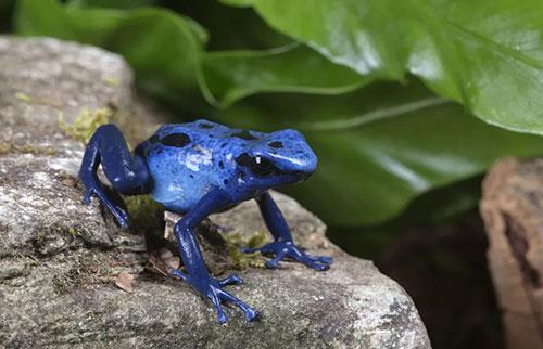 为什么蓝色在自然界中如此罕见?
