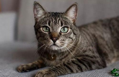 猫是如何获得条纹的?