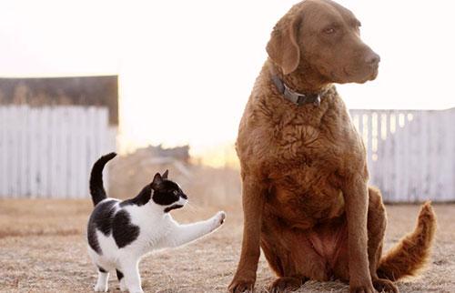猫和狗谁更聪明?